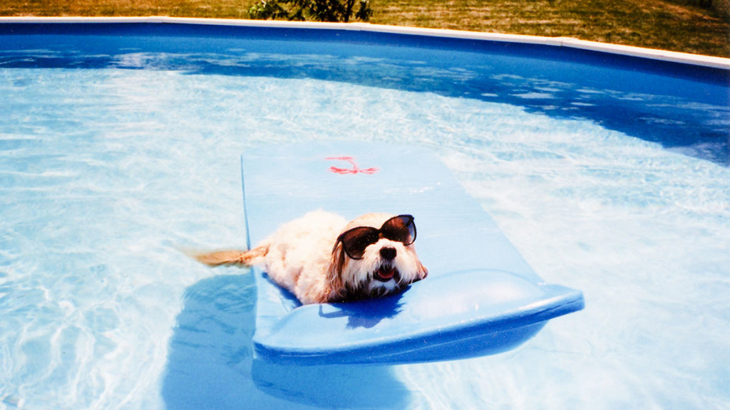 Dog in a pool representing vacation